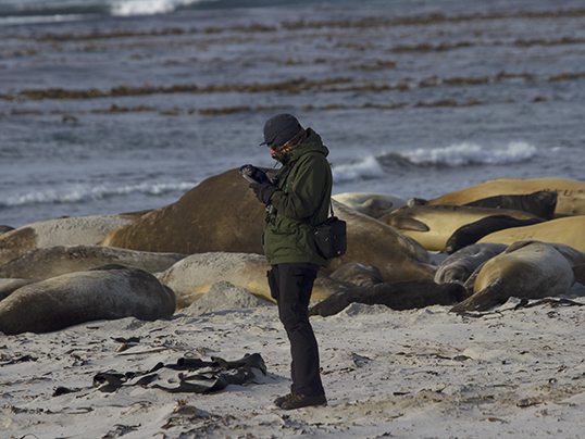 Observing elephant seals
